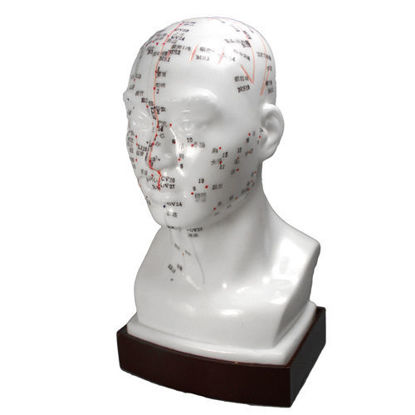 """Picture of Head Model 8"""" (20cm)"""